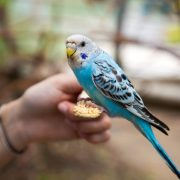How Birds and Reptiles are Related | Clyde Peeling's Reptiland