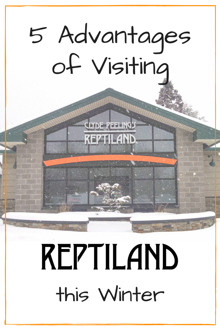 5 Advantages of Visiting Reptiland this Winter | Clyde Peeling's Reptiland