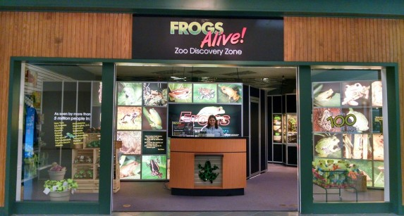 hoppy holiday- frogs alive