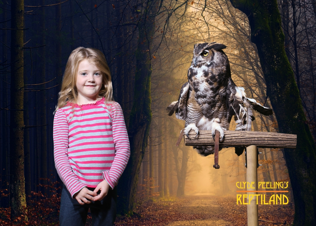 Souvenir Photo Opportunity with Darwin the Great Horned Owl at Flashlight Safari | Clyde Peeling's Reptiland