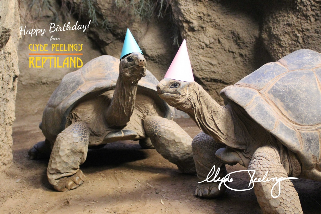 Happy Birthday from Al & Henry at Clyde Peeling's Reptiland! | Zoo Zooms