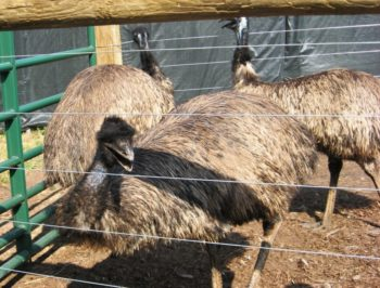 Use our zoo map to find our friendly emus!