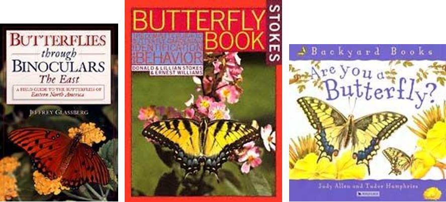 Learn About Butterflies