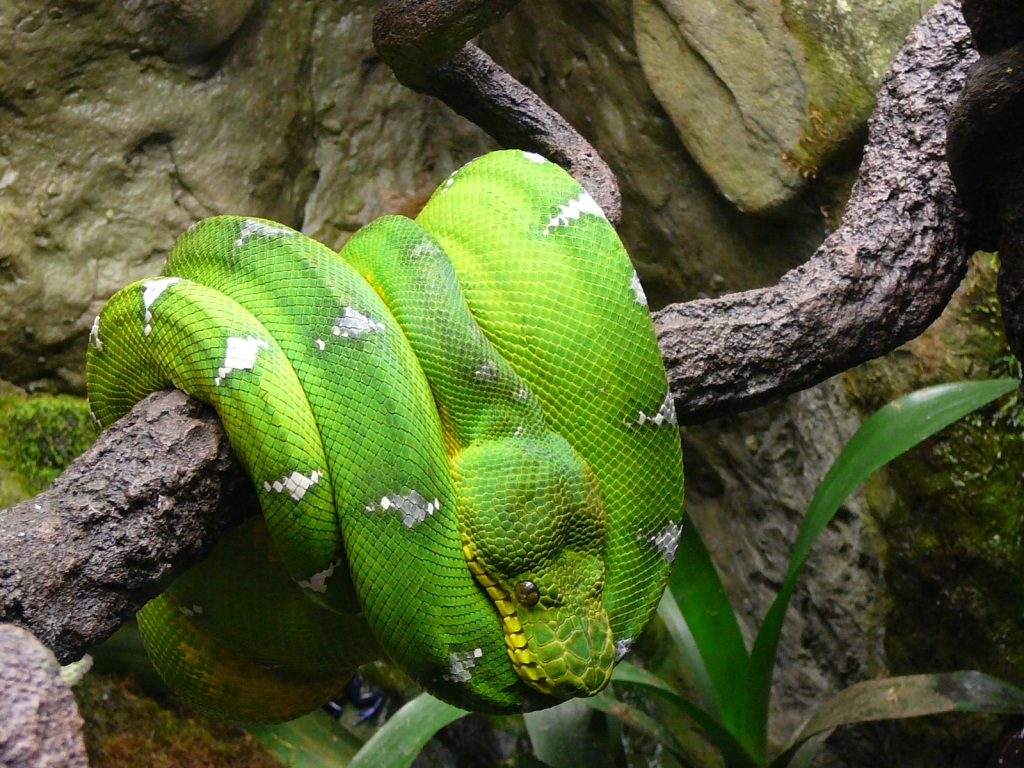 snakes Archives | Clyde Peeling\'s Reptiland